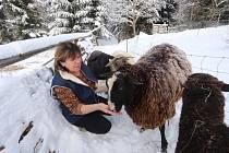 Konečně zimní krajina v oblasti kolem Hojné Vody v Novohradských horách.
