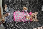 Čtyřletá jorkšírská dvojčátka Jarunku a Betynku chrání před zimou, větrem, deštěm či letním sluncem vždy funkční obleček. Každá jich má 19. V jejich výbavě nechybí růžové plovací vestičky, šatičky, overaly, pyžámka ani klokánky, v nichž se mohou u Evy a E