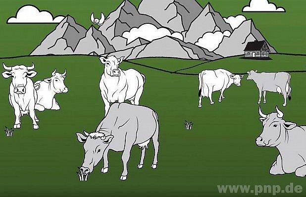 Pastvina není zoo kpomazlení!