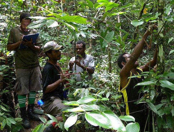 Práce na Papui-Nové Guineji.
