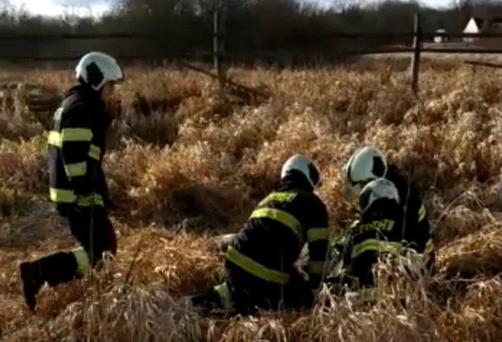 Přímo v krajském městě zachraňovali profesionální hasiči v sobotu 1. února jelena.