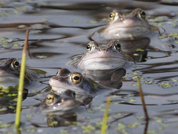 Žáby se zase vydávají na cesty.
