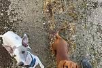 První jarní paprsky a krásnou přírodu si psi Aron a Ellinka užívali.