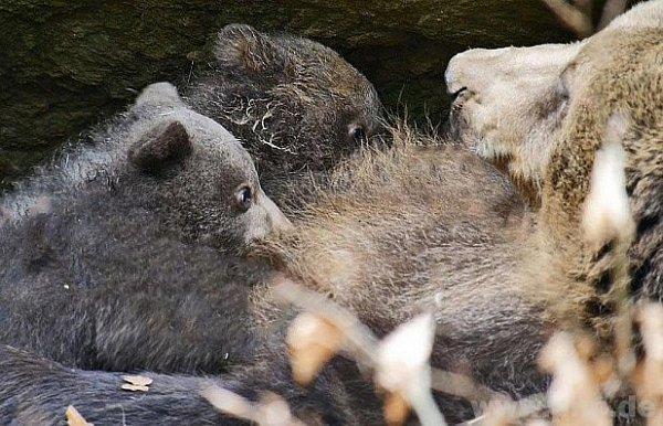 Medvíďata vBavorském parku.