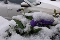 Návrat sněhu 17. 3. 2021 - Lišov.