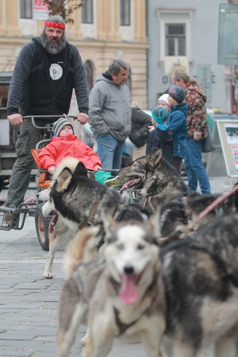 Přehlídka závodních spřežení v Třeboni.