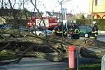 Hasiči odklízeli padlý strom Českých Budějovicích.