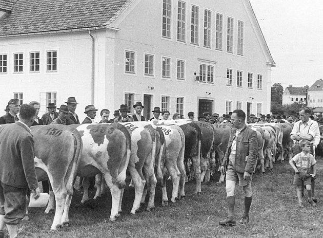 Aukce ve Freistadtu v roce 1957.