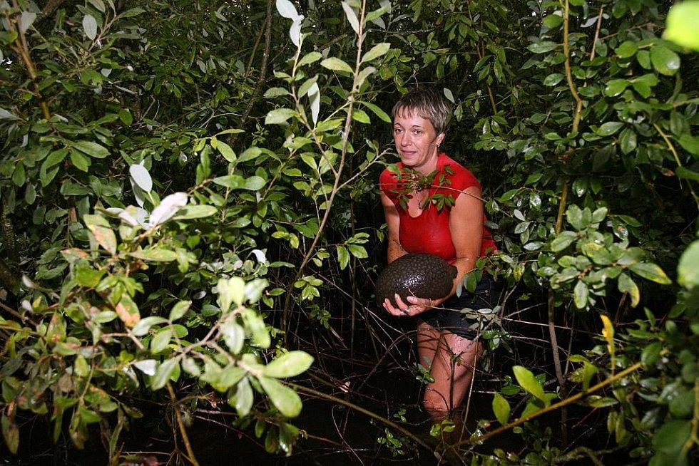 Vědci ze Zemědělské fakulty Jihočeské univerzity 4. září odlovovali bochnatku americkou v pískovnách u Veselí nad Lužnicí. V jihočeských rybnících se začalo dařit odpudivému vetřelci. Rosolovitému vodnímu živočichovi se líbí na rákosí a kořenech stromů
