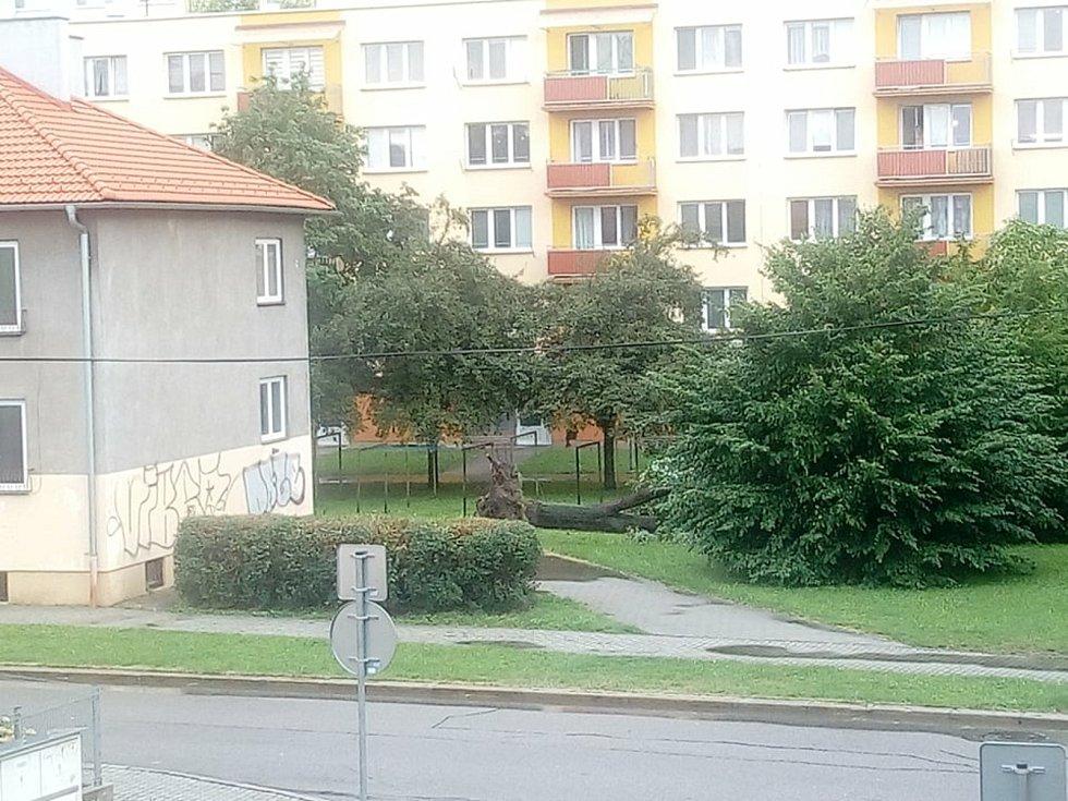 V Budějovicích řádil vítr, vyvrátil strom i v Čéčově ulici.