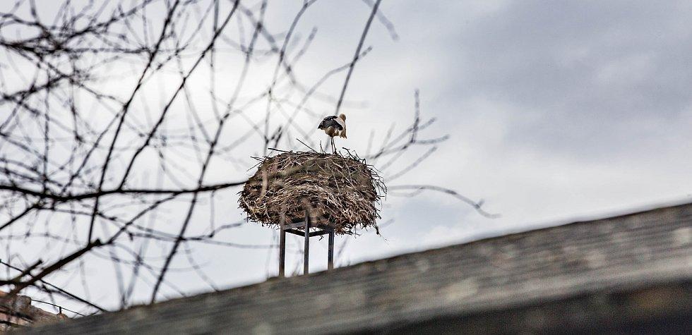 Na komíně již není prázdno. Hnízdo je z půlky zaplněné. Ještě jeden snad přilétne.