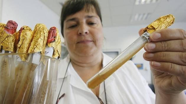 Šéfka oddělení řízení jakosti Lucie Navrátilová drží v ruce původní kmen kvasinek, které se v Budvaru obnovují od založení pivovaru.