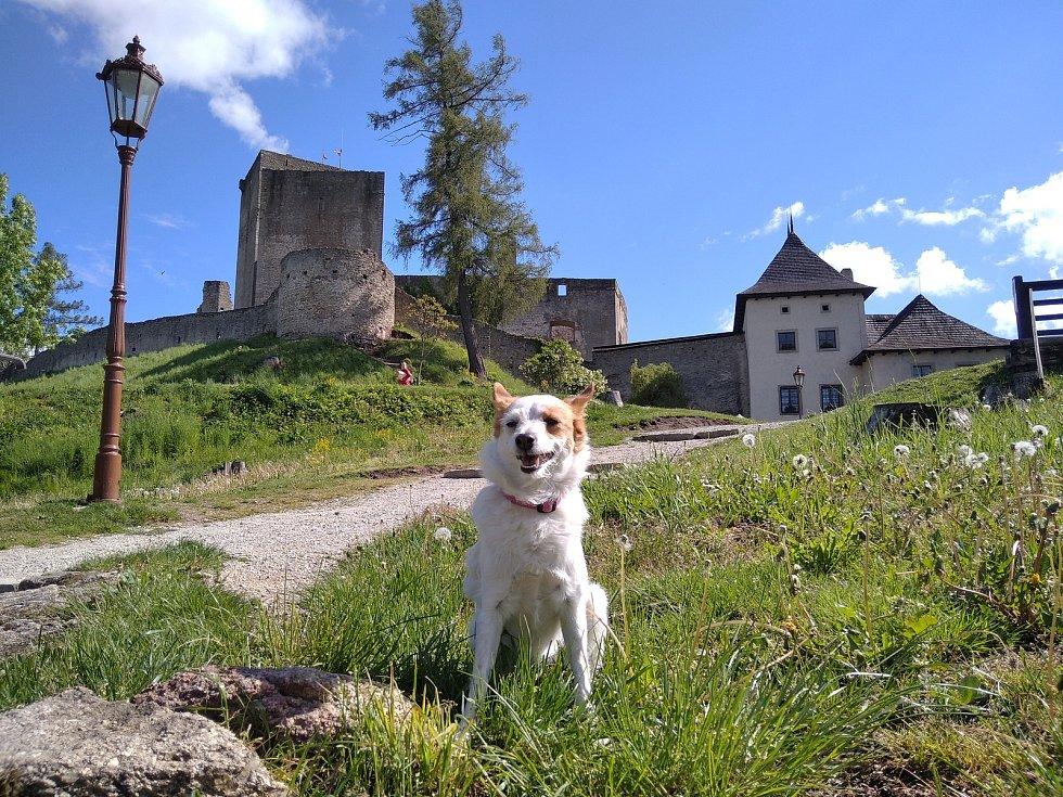 Hrad Landštejn své brány otevřel už 11. května, k výletům láká hlavně za pěkného počasí.