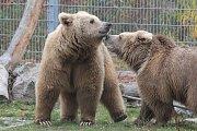 Vzácní medvědi z hlubocké zoo.