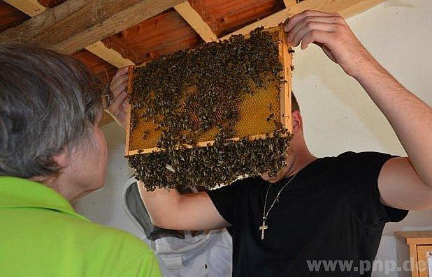 Včely jako terapie.