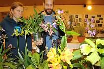 Na sto padesát druhů orchidejí je o víkendu k vidění na tradiční výstavě, která se koná v hasičárně v Homolích.