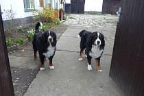 Dva hlídači Barny a Berny.