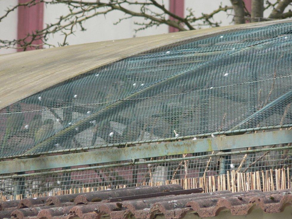 Zákazníky přivítají znovu od 12. dubna 2021 papírnictví, do škol smí polovina dětí na 1. stupeň a s omezenou kapacitou mohou otevřít i zoologické zahrady. Ptačí voliéru v Hluboké nad Vltavou bylo možné v minulých dnech pozorovat jen přes zeď.