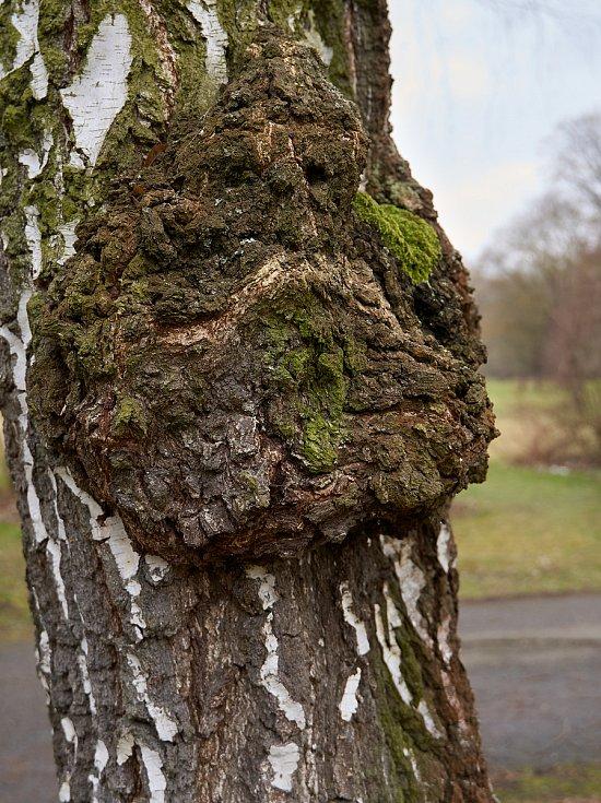 Duch stromový 7 - mračoun