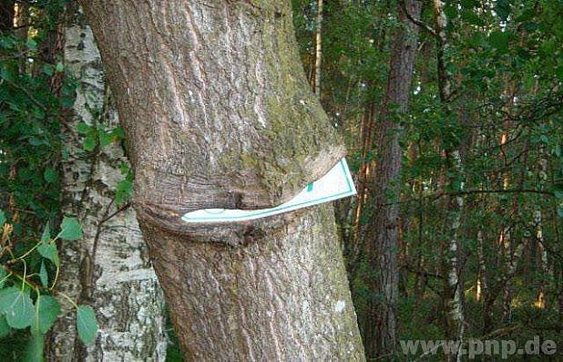 Hladový strom od sousedů.