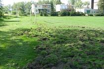 Fotbalové hřiště ve Strýčicích si vyzkoušela i divoká prasata, ale ne při fotbalovém tréninku.