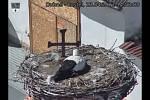 Několik čápů si hnízdo v Dubném na jaře 2021 obhlédlo, žádný pár ho ale zatím neobsadil.