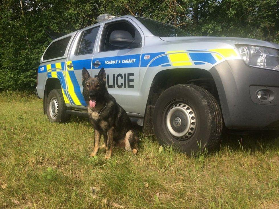 Policisté u Nesměně u Ločenic  na Českobudějovicku odhalili dalšího kopáče vltavínů. Úspěšný policejní pes Marco.