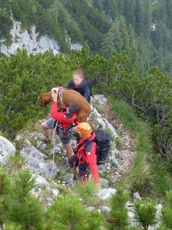 Zachraňovat dogy nebylo lehké…