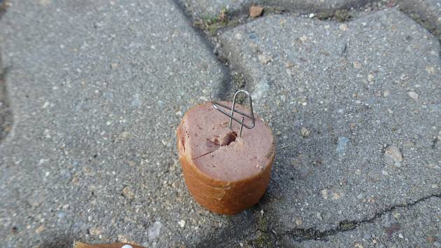 Smrtelné nebezpečí představují tyto návnady s pichlavými předměty, které českobudějovičtí strážníci našli pohozené ve Stromovce a v parku na Plzeňské ulici.