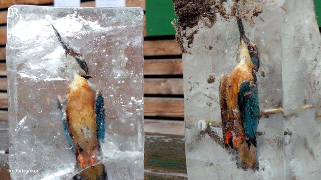 Lednáčci zamrzlí vrybníce…