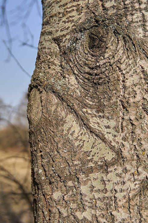 Duch stromový 2
