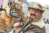 Principál Prvního českého národního cirkusu Jaromír Joo v úterý ukázal na českobudějovickém náměstí půlroční mládě tygra usurijského zvaného Nebojsa. Cirkus ve středu začne svoje působení v areálu výstaviště