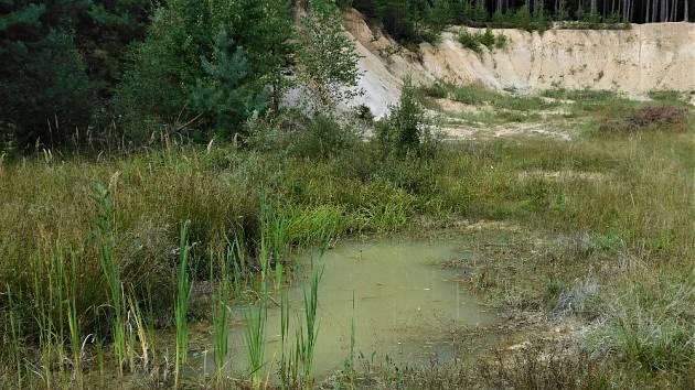 Nově vytvořená tůň v Pískovně Ledenice.