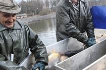 Výlovy kaprů na velikonoční stůl už jsou ve finiši. V minulých dnech se například šupináči lovili v rybníku Vdovec na Třeboňsku.