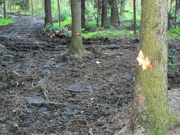 Opoziční zastupitelé nebyli spokojeni, jak se odborná lesní firma o městské lesy, stará. Na snímku je stav části zlivského lesa z května roku 2006.