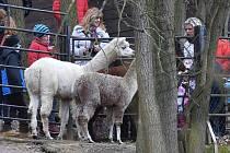 V Zoo Dvorec se podíváte na krmení zvířat.