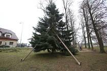 Nepovedený vánoční strom ve Štěpánovicích.