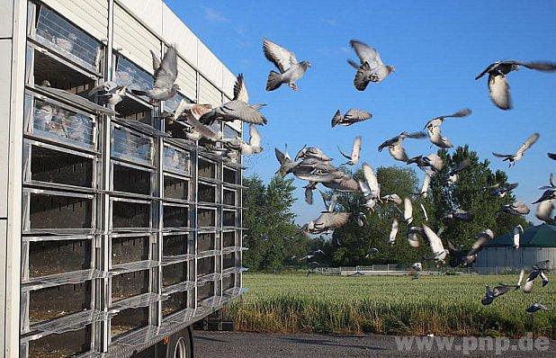Vypustili tisíce poštovních holubů.