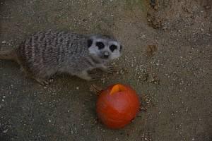O první říjnové neděli slavili v Zoo Dvorec  zvířecí svátek.