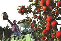 Úroda jablek. Ilustrační foto.