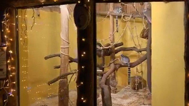 Efektivní podívaná v zoo