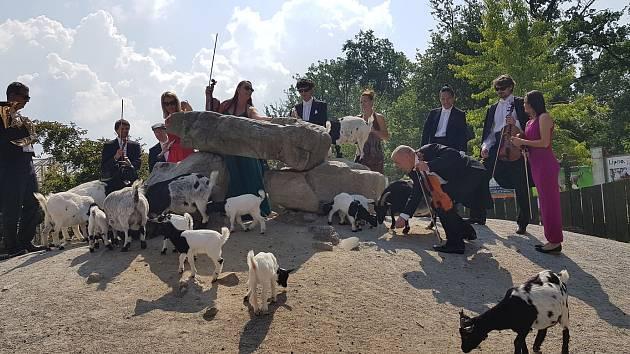 Jihočeská filharmonie natáčela videoklip v zoo na Hluboké.