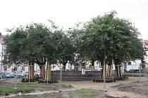 Novohradské náměstí Republiky mění svou dosavadní tvář. Budou zde nové chodníky, lavičky i sluneční hodiny. Pro místní je však nejdůležitější zachování osmi lip.