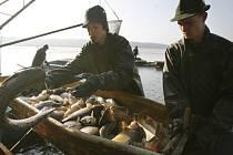 Jihočeské rybářské slavnosti zahájí výlov rybníka Bezdrev.