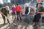 Sázení stromků pod Kletí