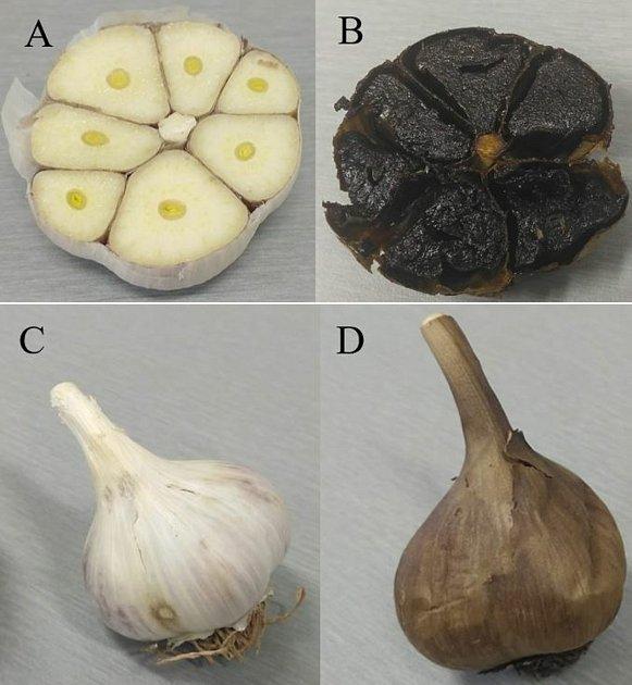 Jihočeští vědci vymysleli vlastní metodu na přípravu černého česneku.