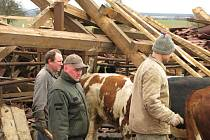 Dva roky stará střecha v místním kravíně nevydržela nápor větru a zřítila se na 52 býků, kteří byly uvnitř.
