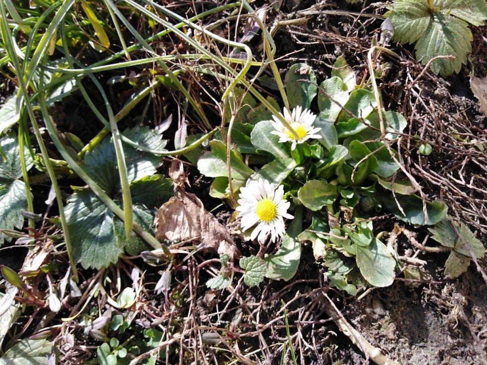 Pozdravy jara ocení hmyz i lidé.