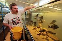 Karel Tyšer chová rybičky z afrických jezer.
