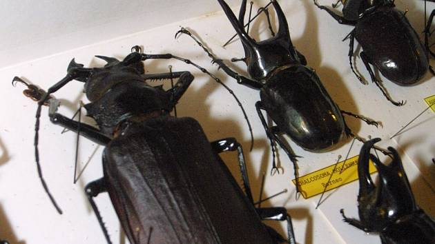 Vzorky hmyzu měly sloužit do entomologické sbírky.